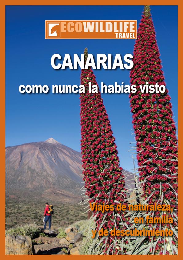 Canarias como nunca la habías visto