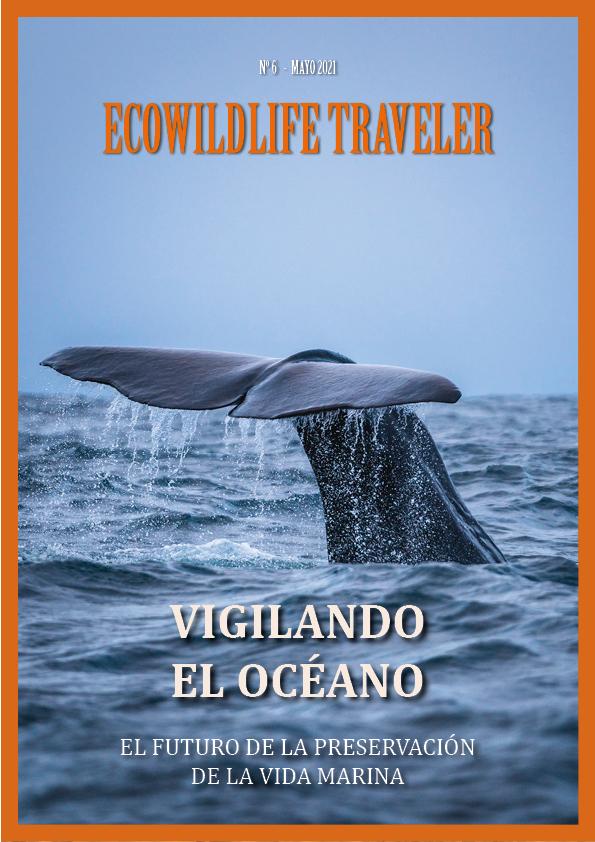Traveler 6: Un Mar de Mujeres