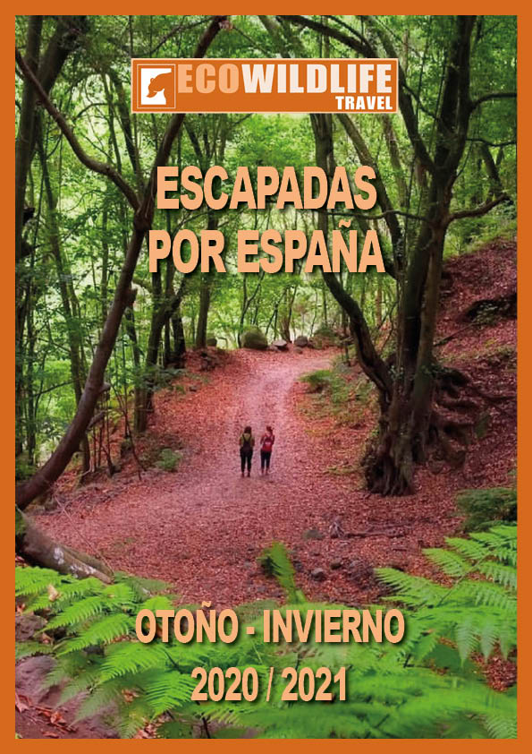 Escapadas por España: Otoño - Invierno 2020/2021