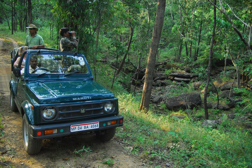 India: Wild Cats