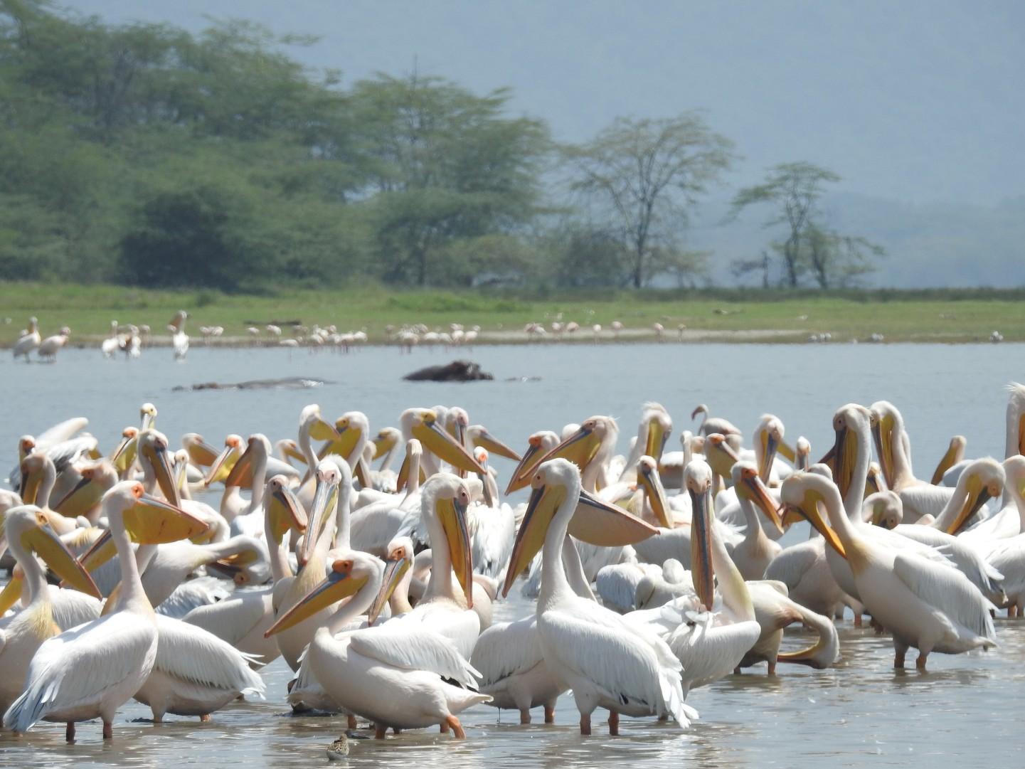 Tanzania: La Gran Migración