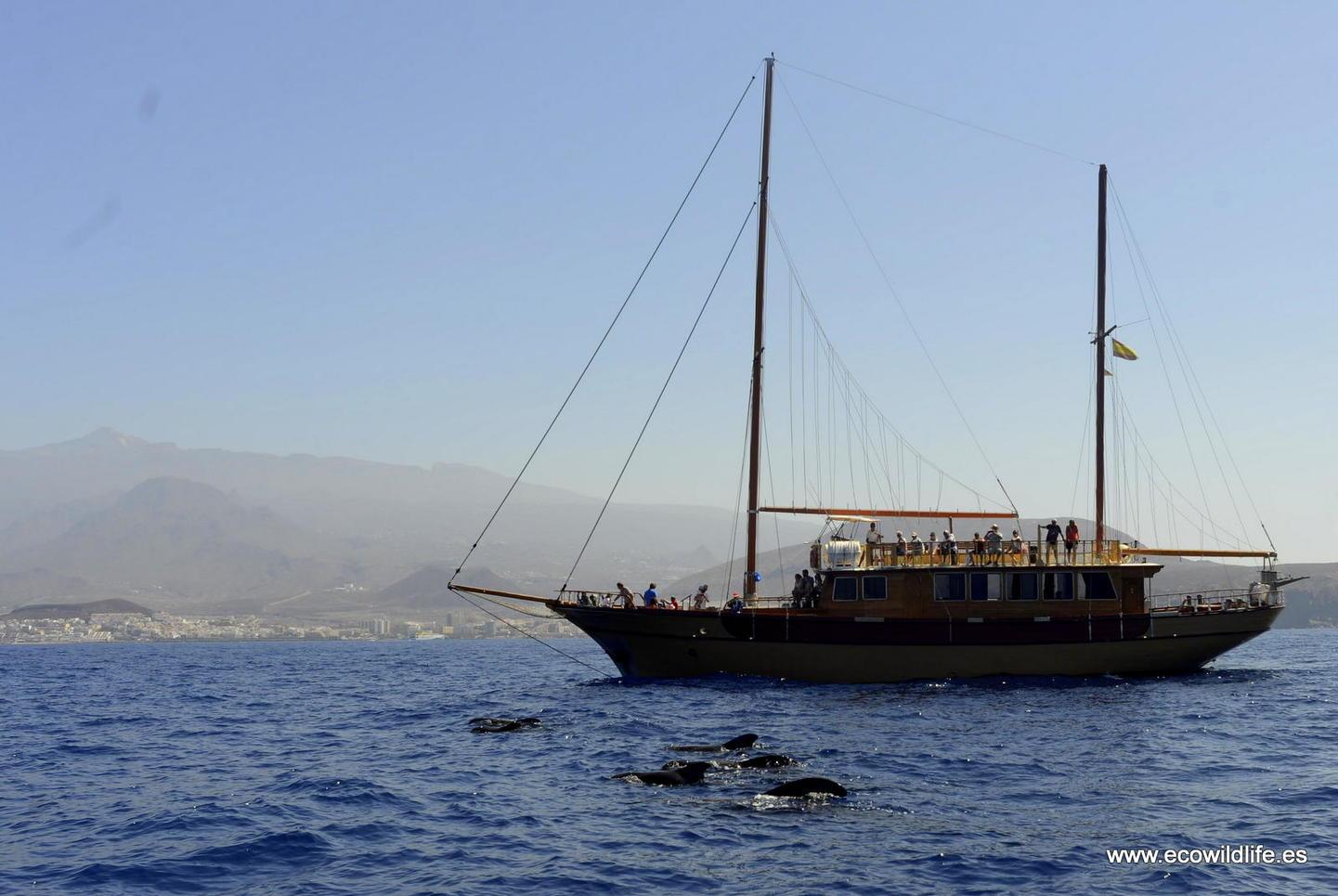 Islas Canarias: Escapada a la biodiversidad