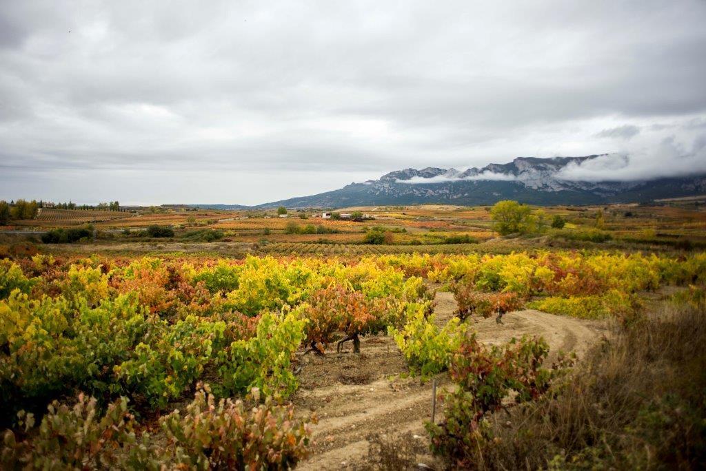 España: Selva de Irati
