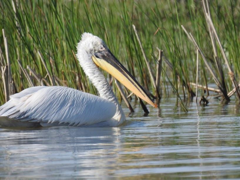 Rumanía: Wildlife en los Cárpatos