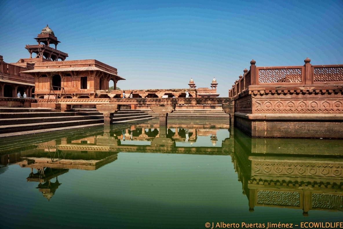 India: Festival Pushkar