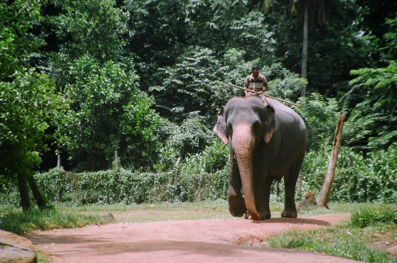 Sri Lanka: Festival Pera Hera