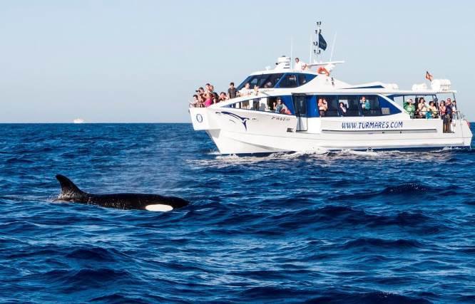 España: En busca de linces y orcas