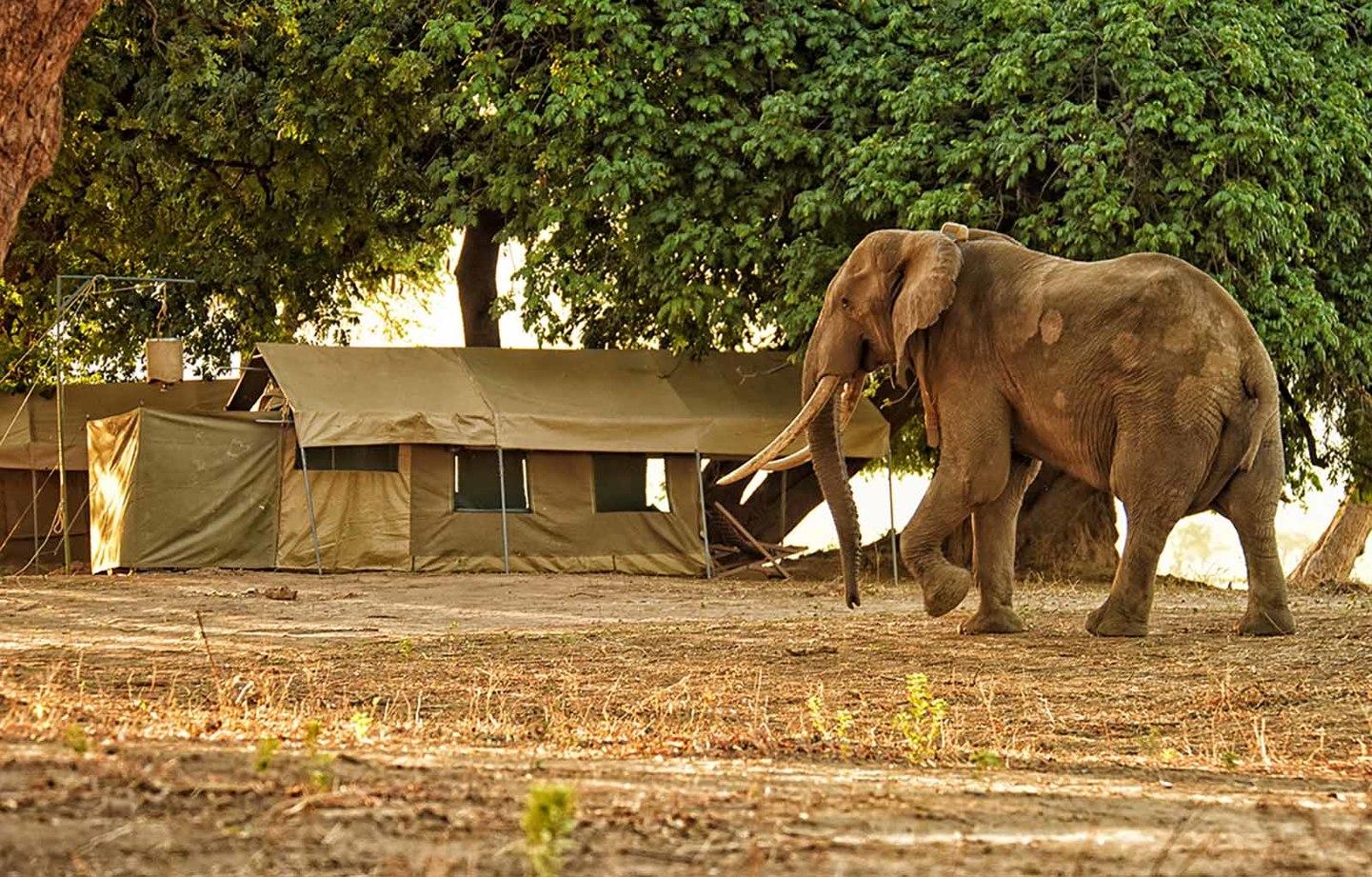 Zimbawe y Botswana: Tras los pasos de Livingstone
