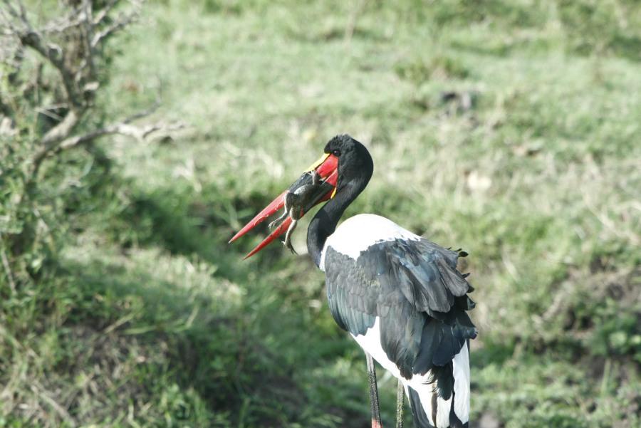 Kenia: Birdwatching