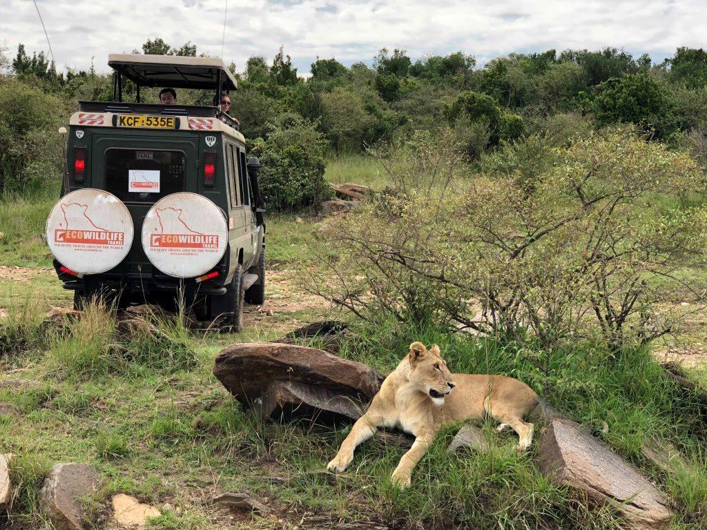 Kenia En Busca De Los Big Five